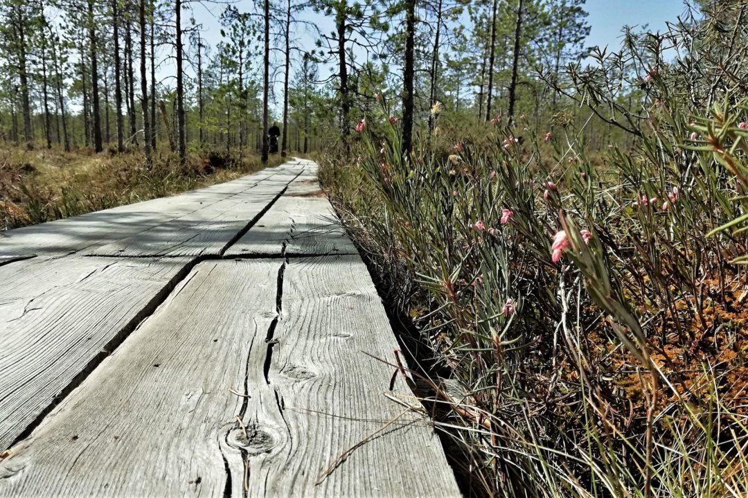 Valgesoo bog - Boardwalk